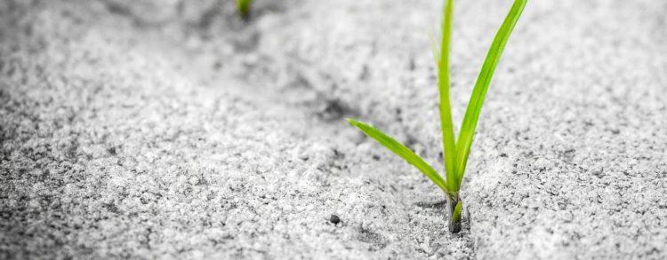Crise, bouleversements, incertitude…et si on regardait ce que la permaculture nous propose ?